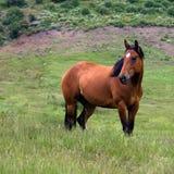 Ensam häst Royaltyfri Bild