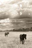 Ensam häst Arkivfoto