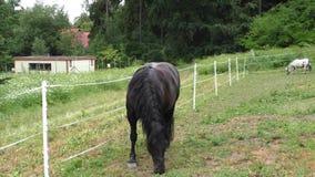 Ensam häst som betar i en äng arkivfilmer