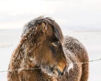 Ensam hästdropp Fotografering för Bildbyråer