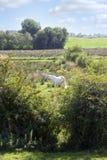 Ensam hästmatning Arkivfoton