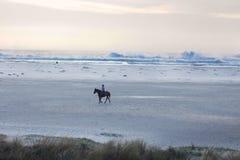 Ensam hästryttare på stranden Arkivbilder