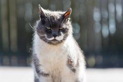 Ensam hemlös mustaschkatt Royaltyfria Bilder