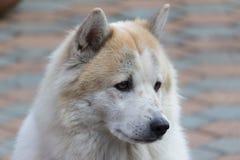 ensam hund Royaltyfria Bilder