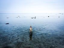 ensam hund Arkivbild