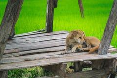 ensam hund Royaltyfri Bild