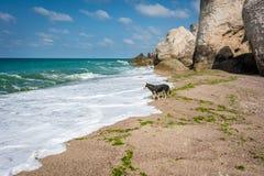 Ensam hund bredvid Blacket Sea i Turkiet Fotografering för Bildbyråer