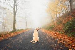 Ensam hund i mystisk dimma Royaltyfri Bild