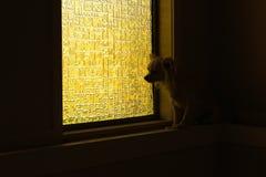 Ensam hund på fönsterfönsterbrädan Fotografering för Bildbyråer