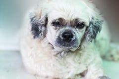 Ensam hund som väntar på ägaren Fotografering för Bildbyråer