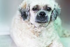 Ensam hund som väntar på ägaren Royaltyfria Bilder