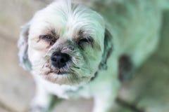 Ensam hund som väntar på ägaren Arkivfoto