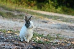 Ensam kanin arkivfoton