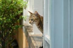 Ensam katt för gata royaltyfri foto