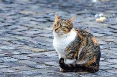 Ensam katt som söker för mat i en kall dag Arkivbilder