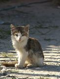 ensam kattunge Arkivfoton