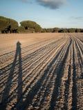 Ensam lång mänsklig skugga på solnedgången arkivbild