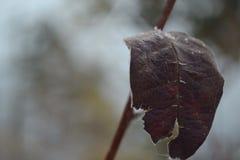 ensam leaf Arkivbild