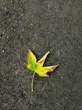 ensam leaf royaltyfria foton