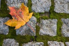 ensam leaf Arkivbilder