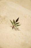 ensam leaf Royaltyfri Foto