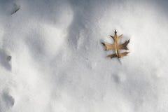 ensam leaf Royaltyfri Bild
