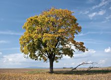 ensam liten tree Arkivfoton