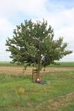 Ensam Loosslagfält Frankrike för träd WW1 Arkivbild