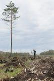Ensam man bland avverkad timmer Ett högväxt träd Royaltyfri Foto