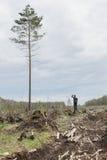 Ensam man bland avverkad timmer Ett högväxt träd Royaltyfria Bilder