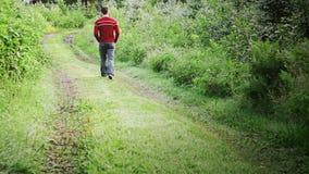 Ensam man som går i skog stock video