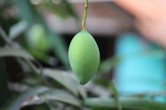 Ensam mango Arkivbild