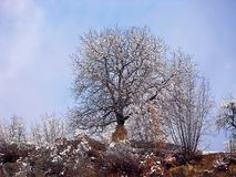 ensam oak Arkivbilder