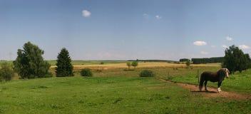 ensam paddock för häst Arkivfoton