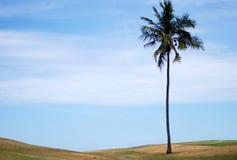 ensam palmträd Royaltyfria Bilder