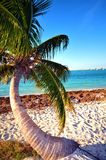 Ensam palmträd Arkivfoton