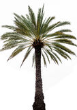 Ensam palmträd Arkivfoto