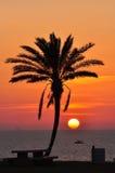 Ensam palmträd i ljuset av solnedgånghavet Royaltyfri Fotografi