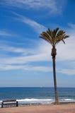 Ensam palmträd på stranden Fotografering för Bildbyråer
