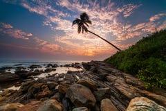 Ensam palmträd på stranden på solnedgången Arkivfoton