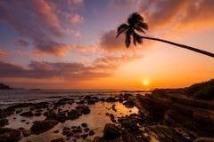 Ensam palmträd på stranden på solnedgången Fotografering för Bildbyråer