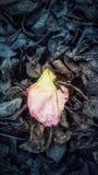 ensam petal fotografering för bildbyråer
