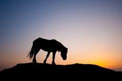 ensam ponny Royaltyfri Fotografi