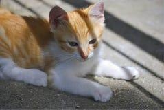 Ensam röd kattunge royaltyfri bild