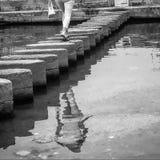 Ensam reflexion Fotografering för Bildbyråer