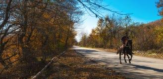 Ensam ryttare på häst Royaltyfria Bilder