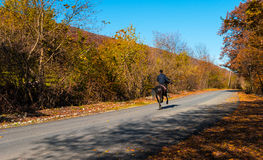 Ensam ryttare på häst Arkivbild