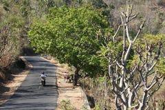 Ensam ryttare på vägen i skogen Arkivbild