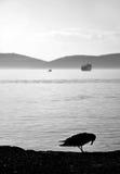 Ensam seagull Royaltyfria Bilder