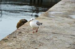 Ensam seagull Royaltyfri Bild